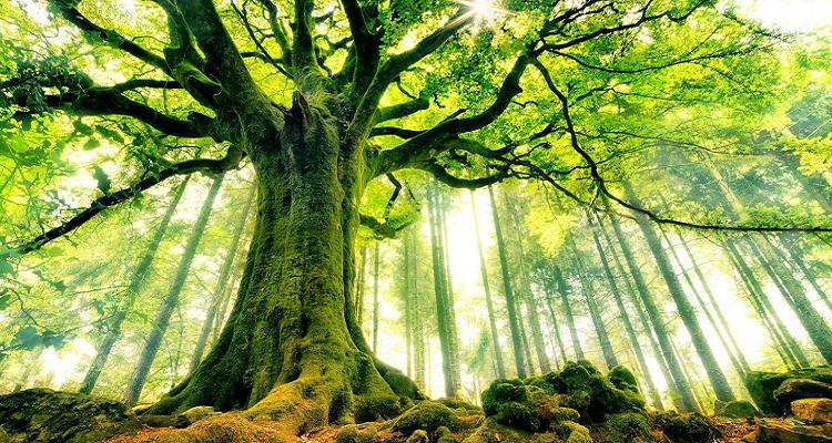 Plantons 1 million d arbres