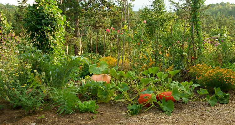 Jardin Bio Facile