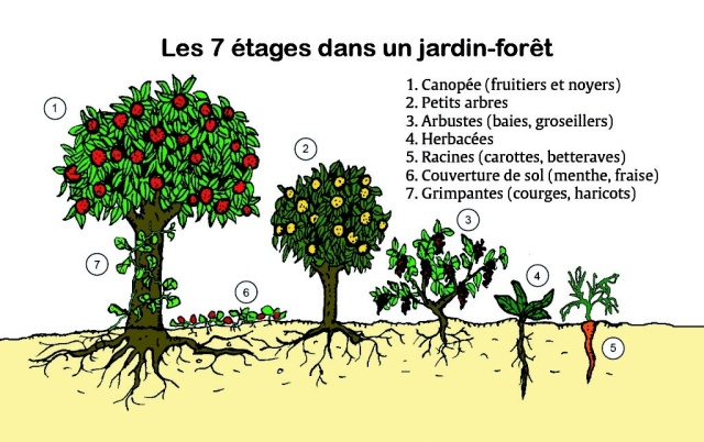 La Forêt Comestible - Permatheque