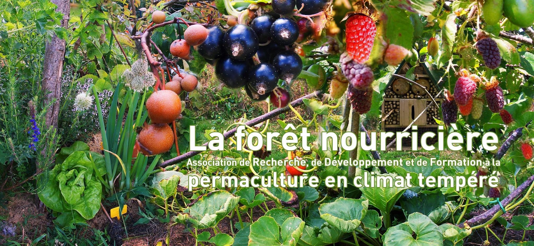 Association La Forêt Nourricière